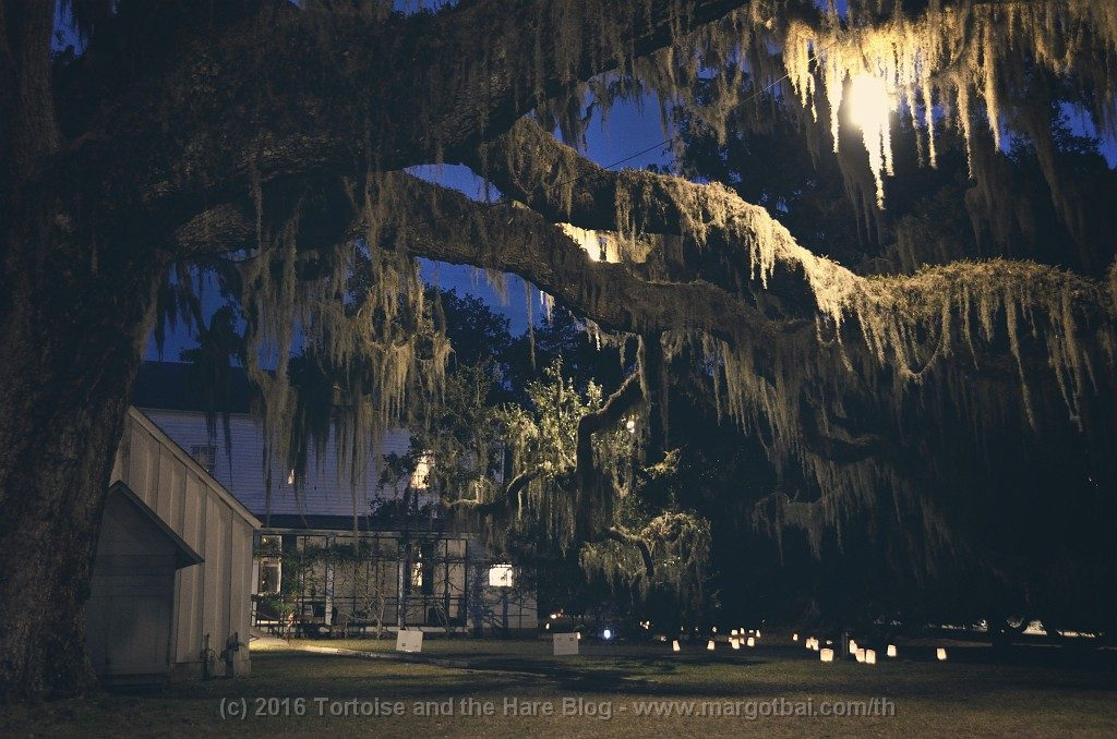 Hofwyl-Broadfield Plantation at night - the spanish moss looks even more creepy!