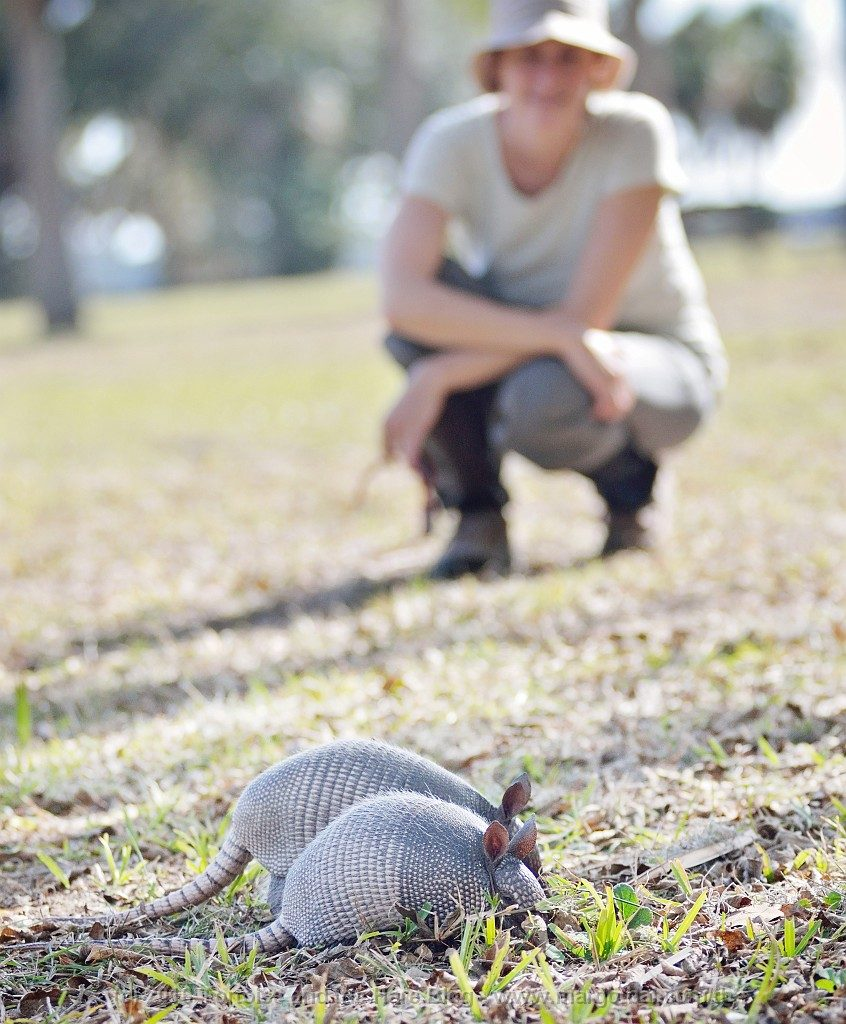 Watching the armadillos' antics up close while they forage was a lot of fun!