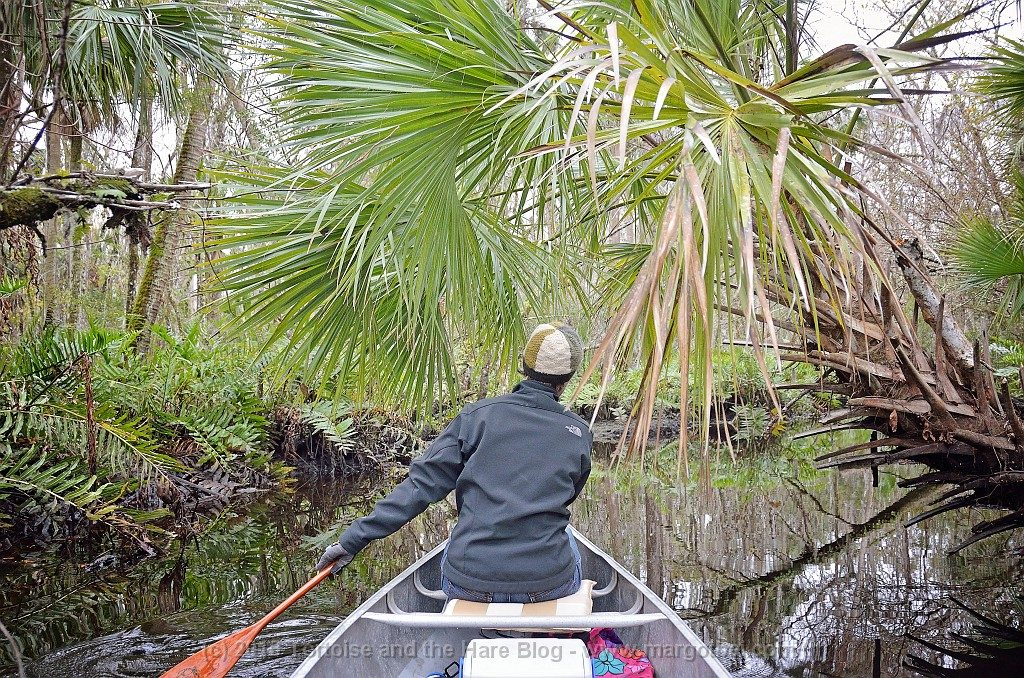 Our first time canoeing amongst palm trees on Pellicer Creek