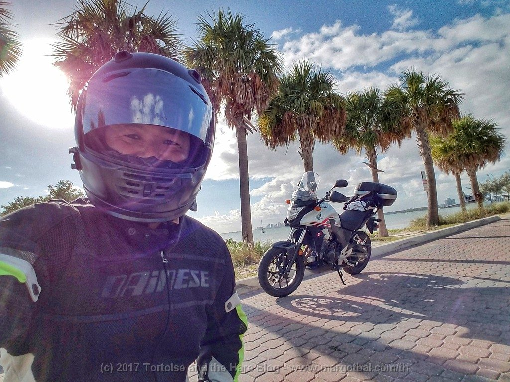 James stops for a photo op by the palm trees on the causeway to Biscayne Key