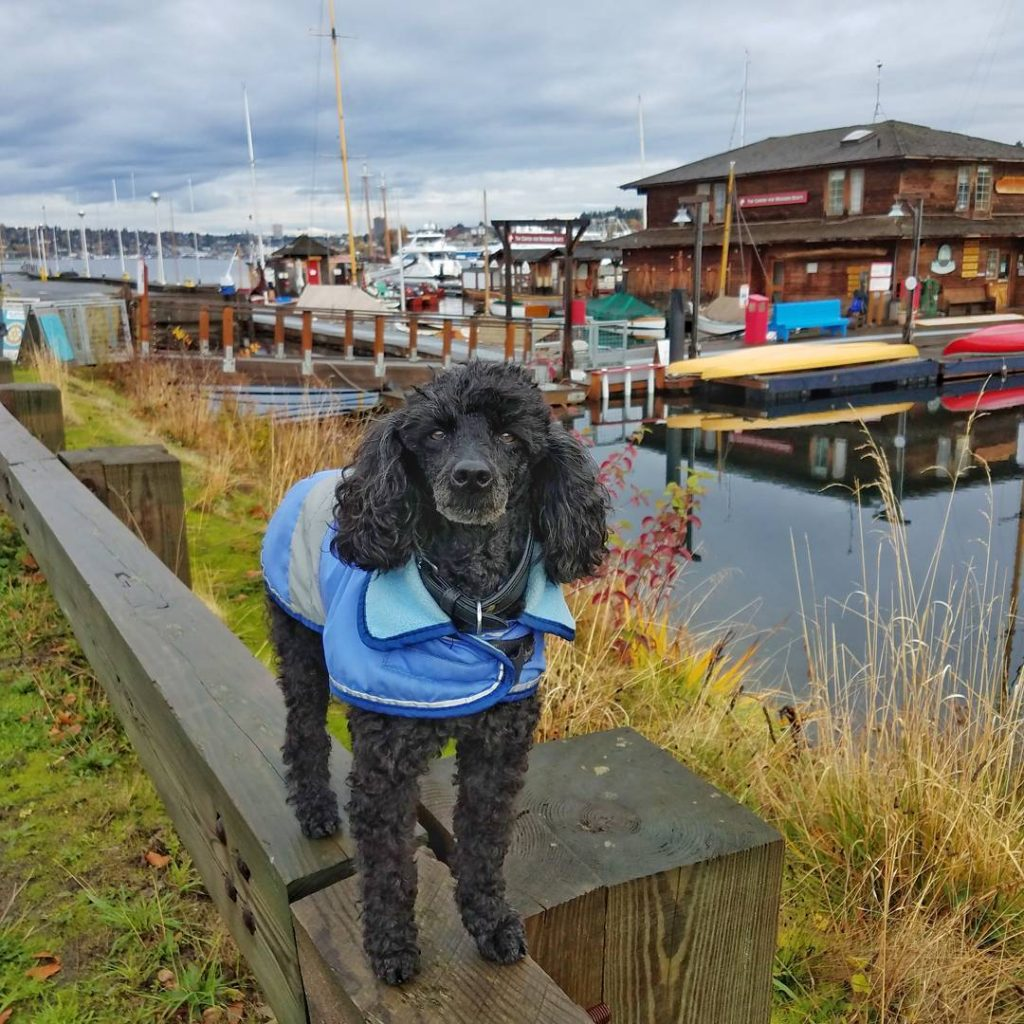Back in Seattle today checking out the wooden boats onhellip