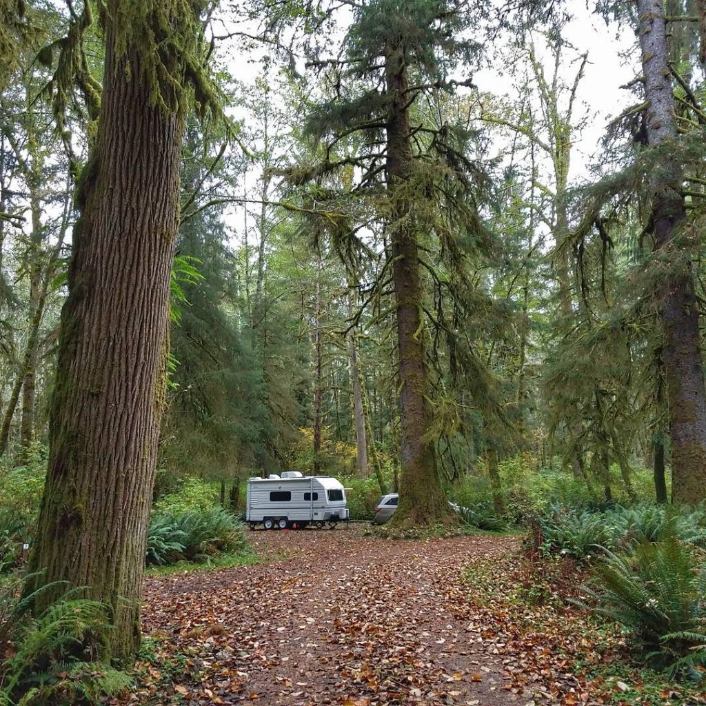 Camping surrounded by massive trees dripping with moss near Forkshellip